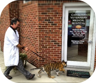 Dr. Thomas Watson with Maggie the tiger from Suzies Pride